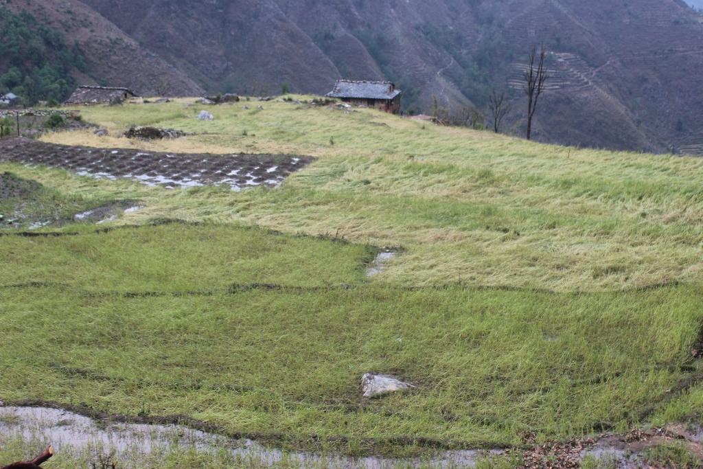 ठाँटिकाँधमा असिनाले वालीनाली सखाप, २० करोड भन्दा वढि क्षति